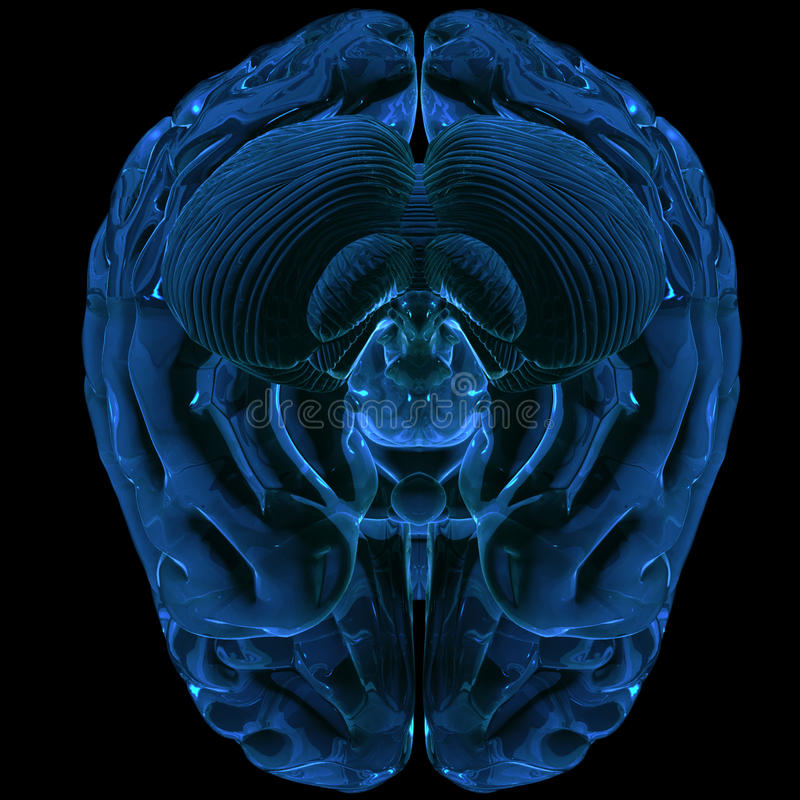 3d mózg odpłacający się royalty ilustracja