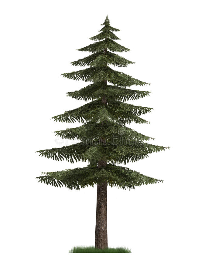 Download 3D Model of Fir Tree stock illustration. Illustration of nature - 15410652