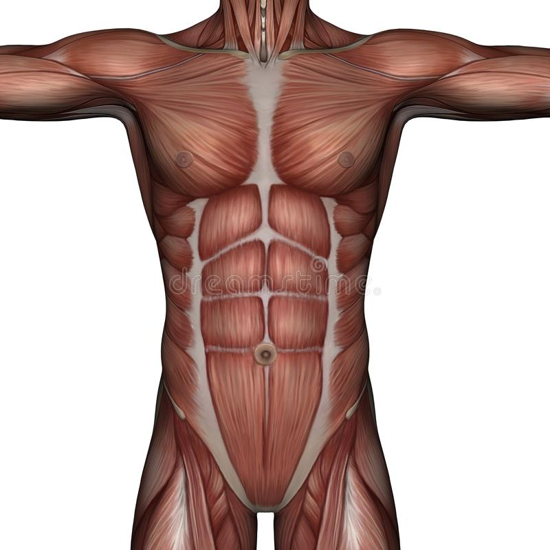 Download 3D muscle of man stock illustration. Illustration of body - 13023985