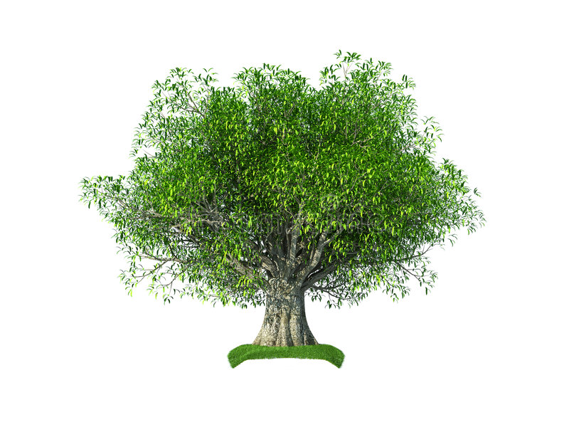 3d olive tree. Render of the 3d olive tree isolated on the white background
