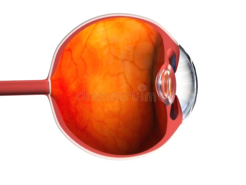 3d oog vector illustratie