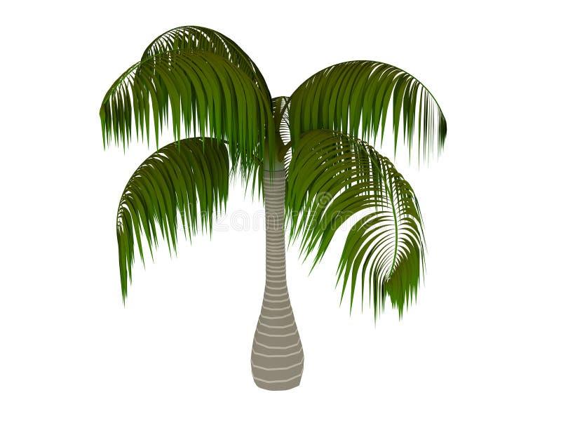 3d palm royalty-vrije illustratie