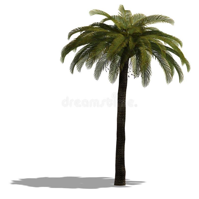 3D rendem de uma palmeira ilustração stock