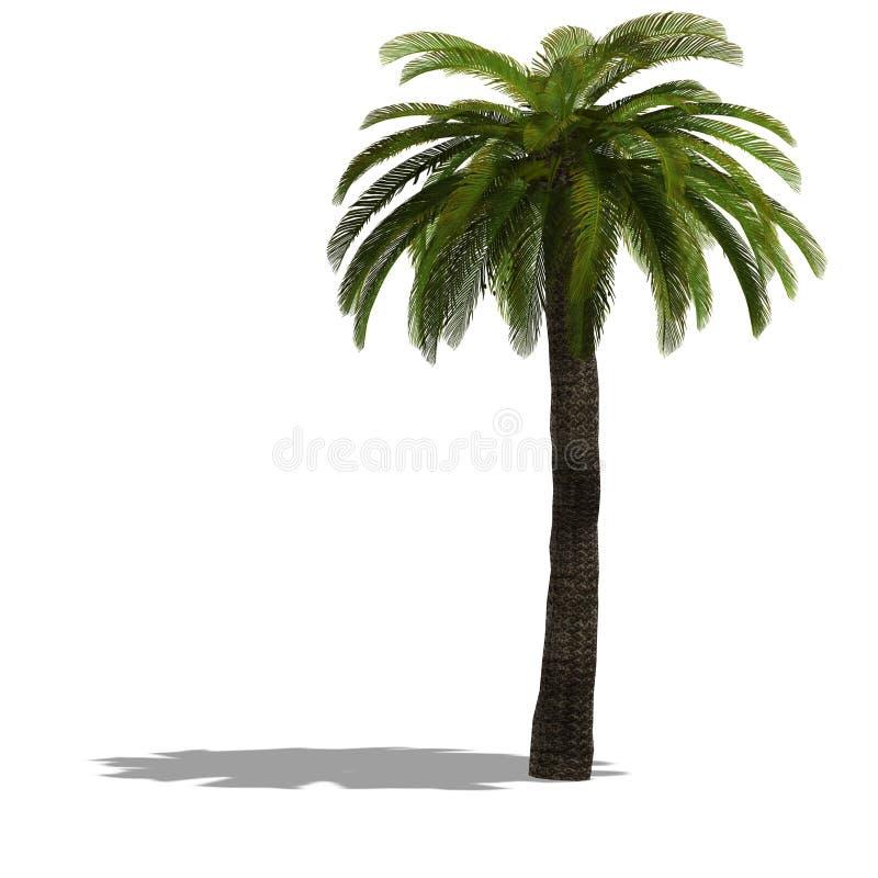 3D rendem de uma palmeira ilustração do vetor