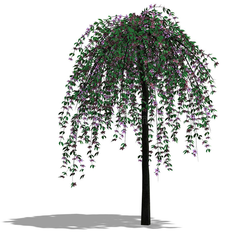 Download 3D Render of a Tree stock illustration. Image of isolated - 9407781