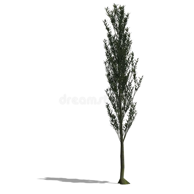 Download 3D Render Of A Tree With Shadow And Clipping Path Stock Illustration - Illustration of broadleaf, generated: 9859425
