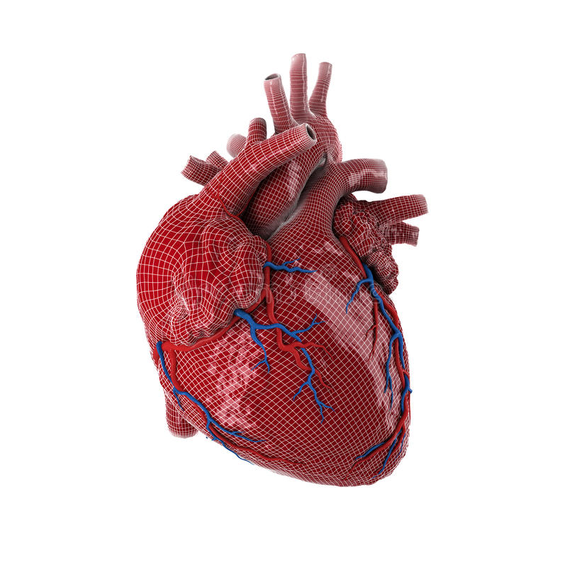 Free 3d Rendered Human Heart. Royalty Free Stock Photos - 65433178