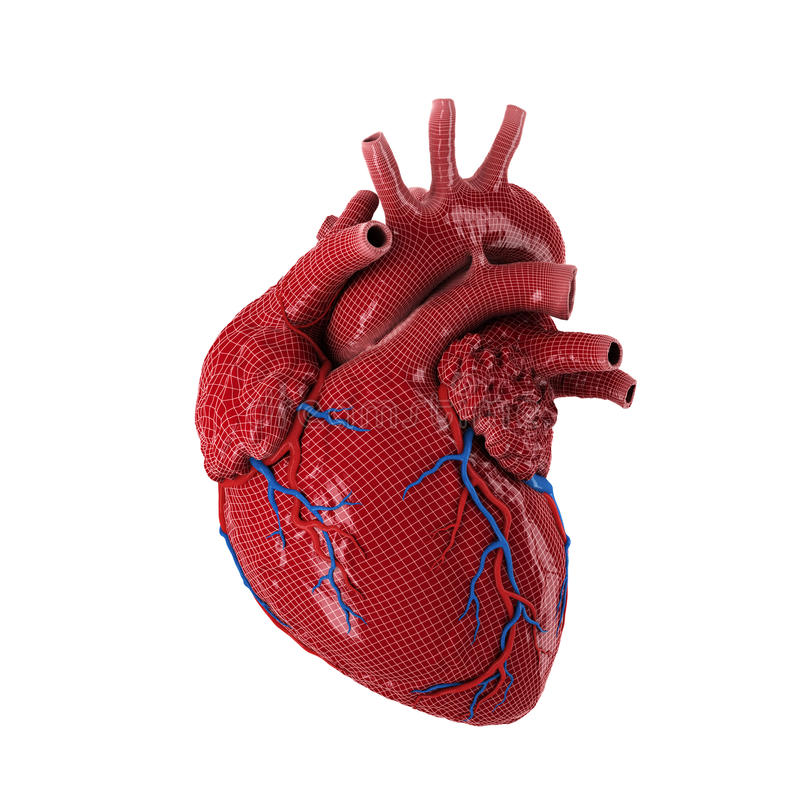 Free 3d Rendered Human Heart. Royalty Free Stock Photography - 65433337