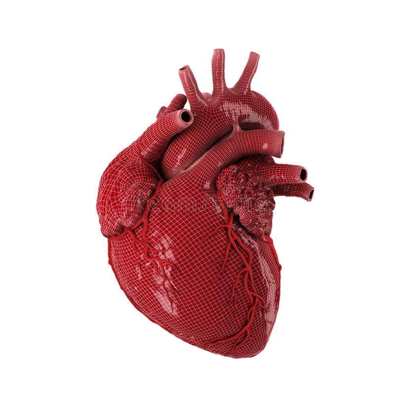 Free 3d Rendered Human Heart. Royalty Free Stock Photography - 65435577