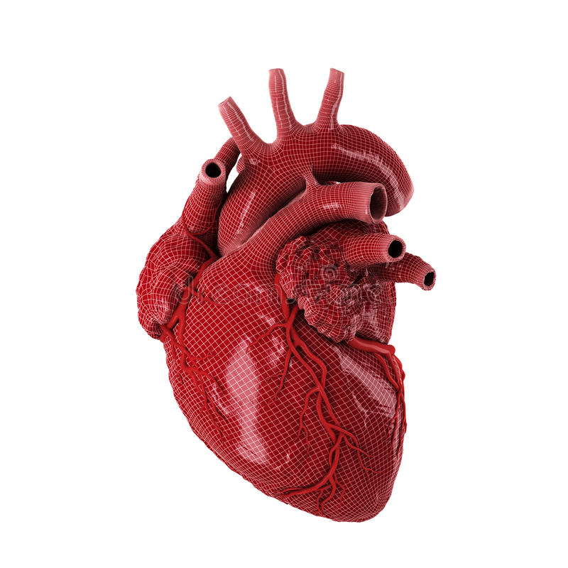 Free 3d Rendered Human Heart. Royalty Free Stock Photography - 65435647