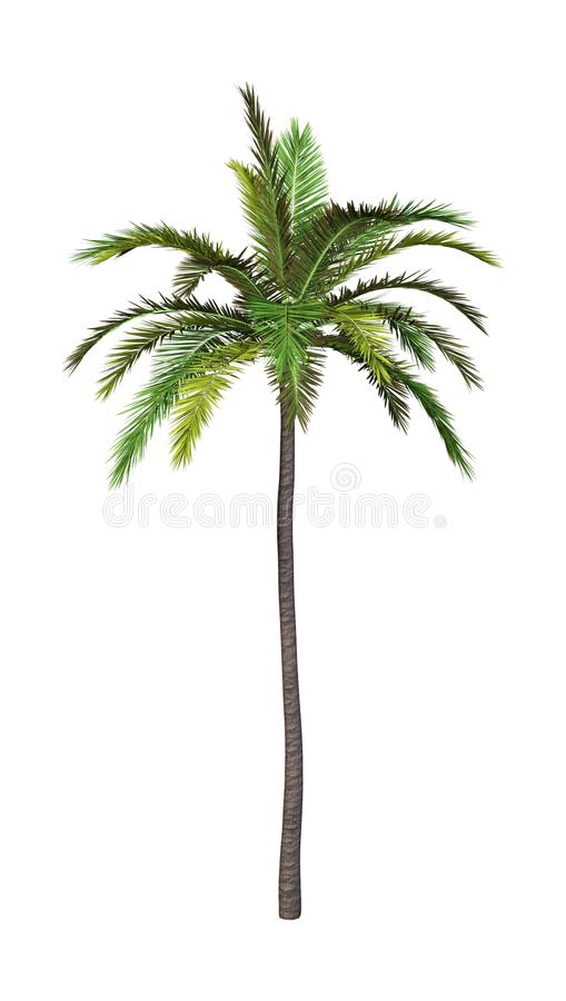 Free 3D Rendering Coconut Tree On White Royalty Free Stock Photo - 112276885