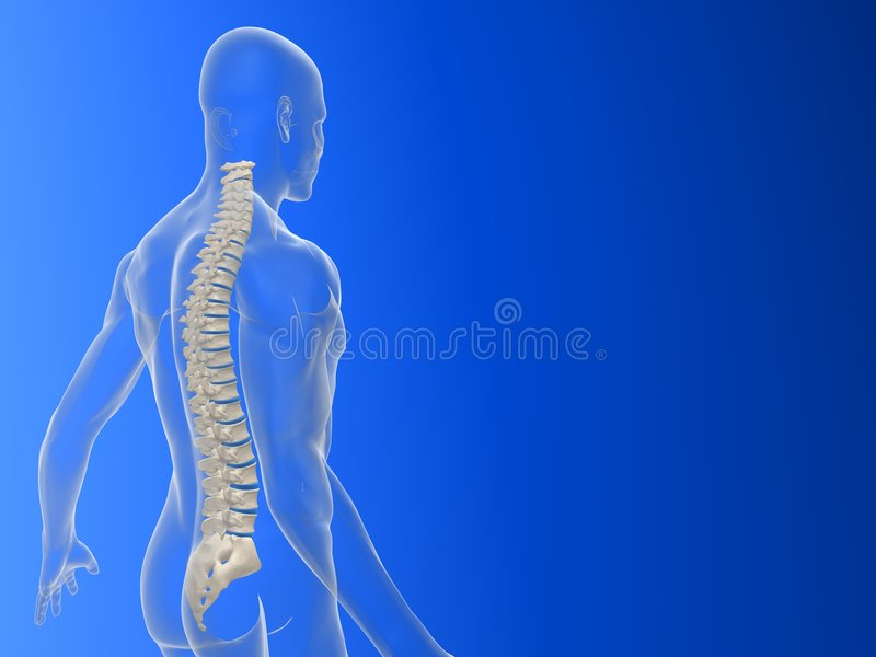 3d spine royalty free illustration