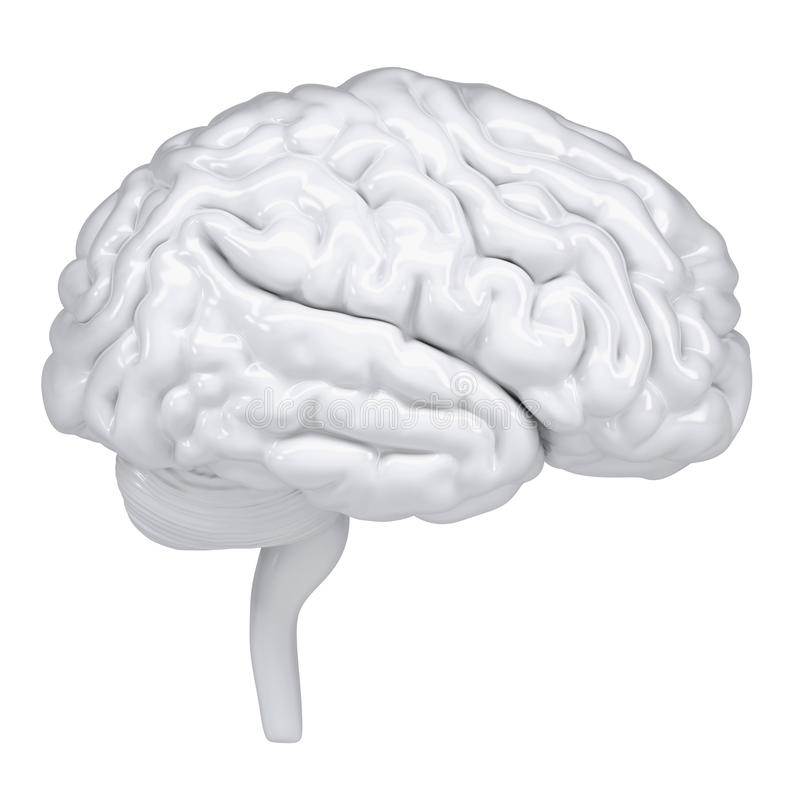 3d white human brain. A side view stock illustration
