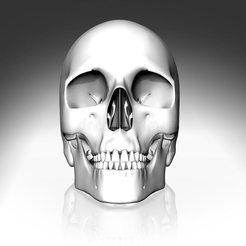 3D white skull stock photography