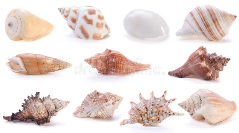 4不同海运壳 免版税库存照片
