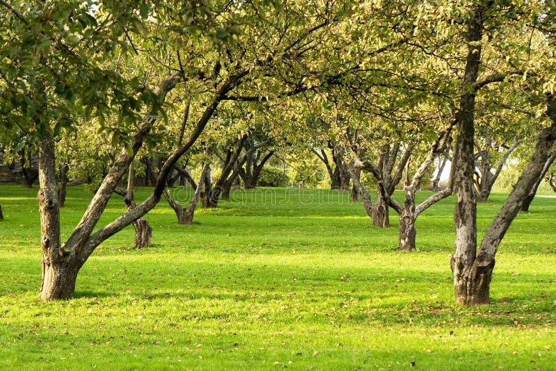 4公园行 图库摄影