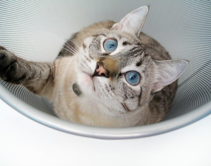 4只猫作用 库存图片