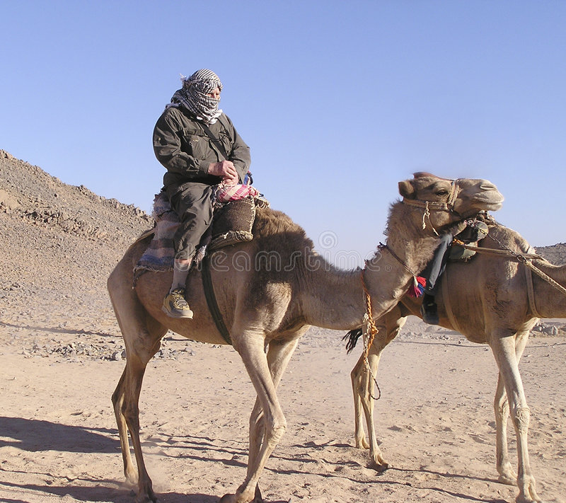 4头骆驼前辈游人 免版税图库摄影