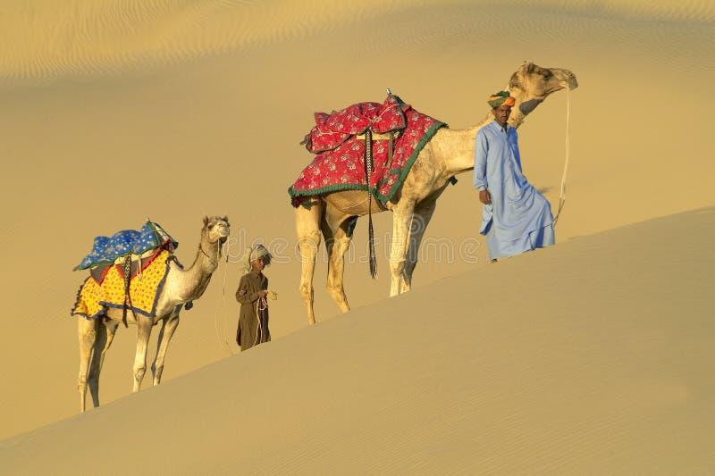 4头骆驼有蓬卡车印地安人 库存照片