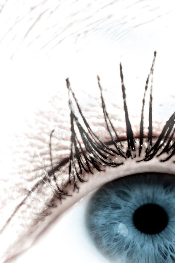 4眼睛 免版税库存图片