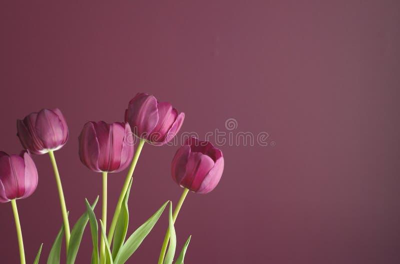 4紫色郁金香 库存图片