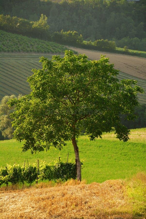 4结构树 免版税库存图片