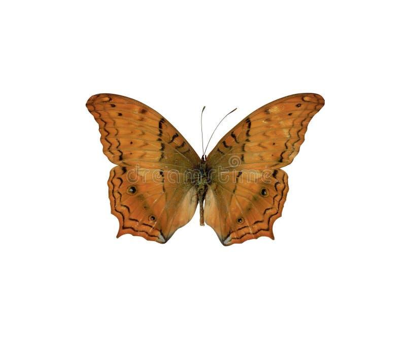 4蝴蝶 免版税图库摄影