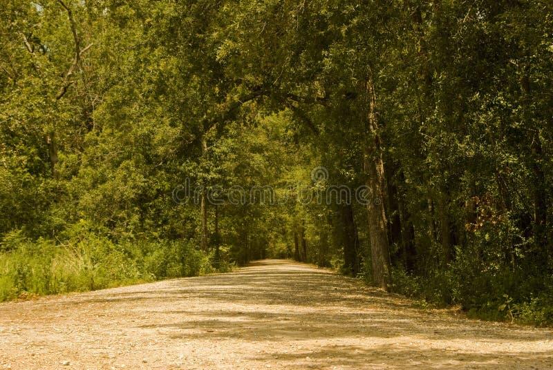 4 δάση μονοπατιών στοκ φωτογραφία με δικαίωμα ελεύθερης χρήσης