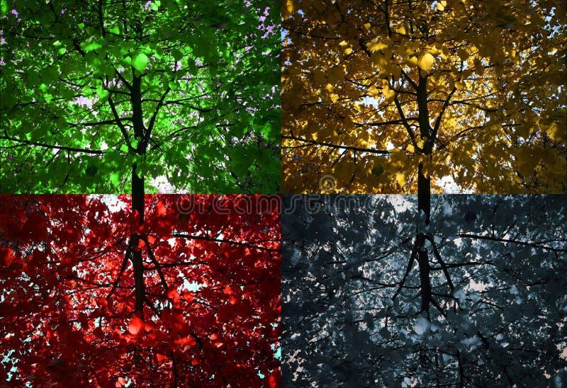 4 δέντρα στοκ φωτογραφίες με δικαίωμα ελεύθερης χρήσης