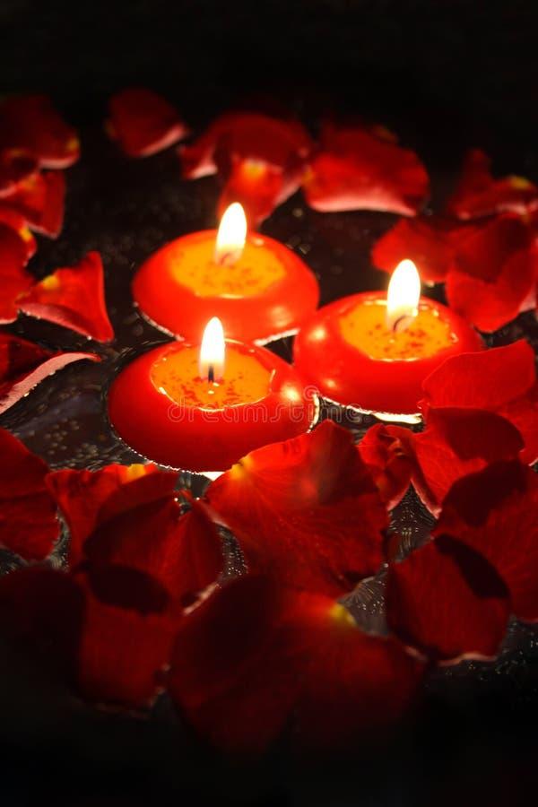 4 πέταλα κεριών αυξήθηκαν στοκ εικόνες