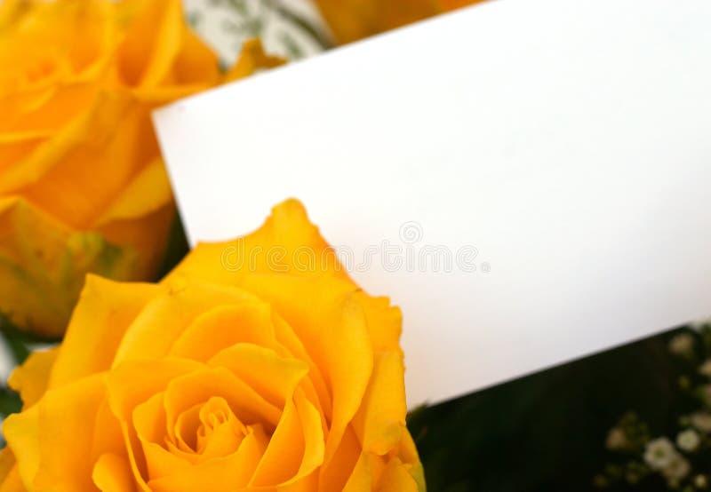 4 τριαντάφυλλα κίτρινα στοκ εικόνα