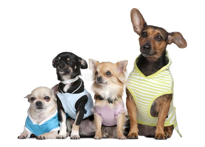 4 группа одетьнная собаками вверх стоковые изображения