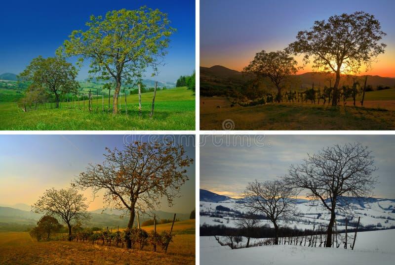 4 сезона стоковое изображение