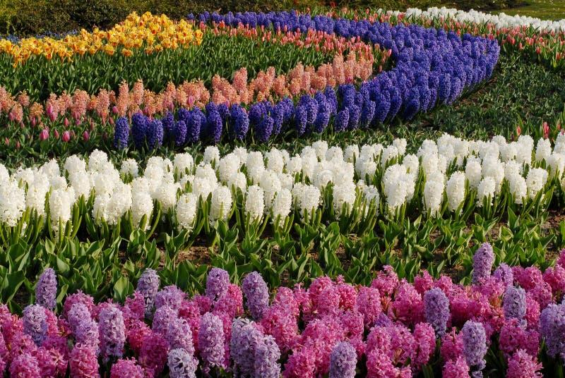 4 цветка шарика стоковые изображения