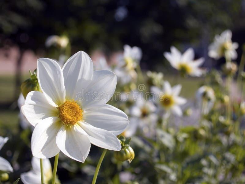 4 цветка стоковая фотография rf