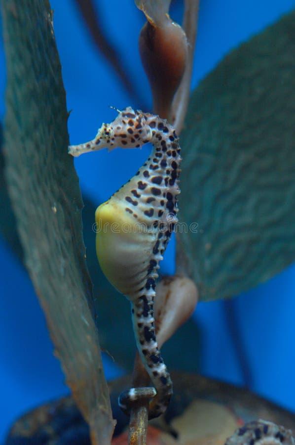 4 egzota ryb obrazy royalty free