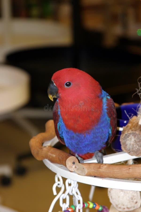 4 Fåglar Fotografering för Bildbyråer