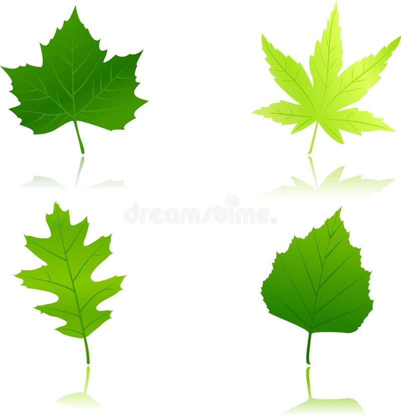 4 folhas verdes da mola ilustração stock