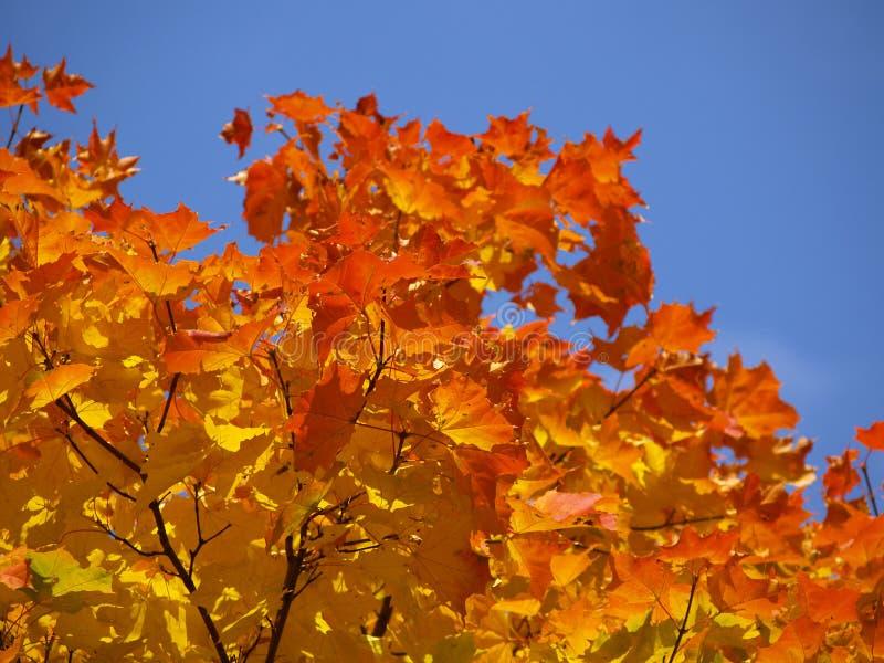 4 jesieni obraz stock