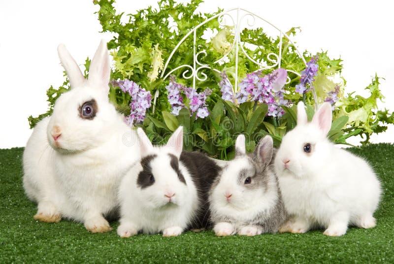 4 królików kwiatów zielony gazon fotografia royalty free