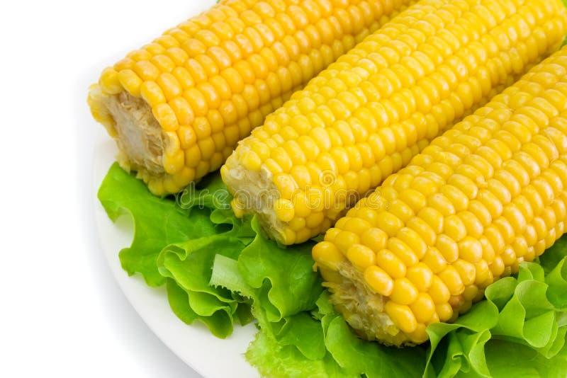 4 kukurydza zdjęcia stock