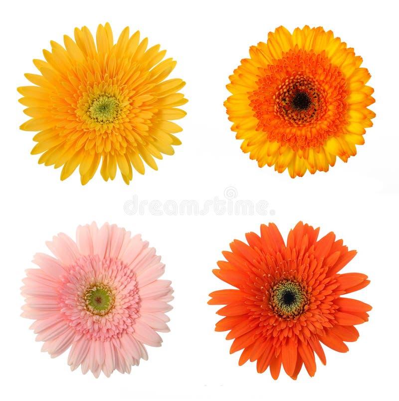 4 kwiat obraz royalty free