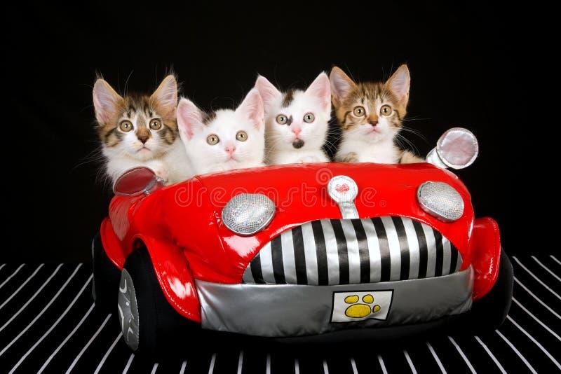 4 leuke katjes in rode zachte stuk speelgoed auto stock afbeeldingen