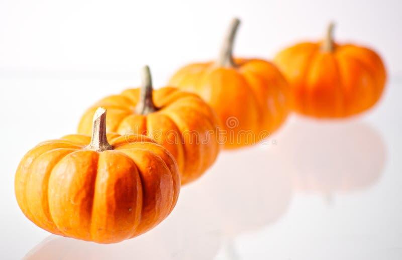 4 Miniature Pumpkins On White Stock Photo