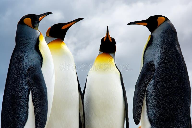 4 re Penguins fotografia stock