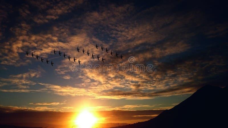 4 Rosw Of Birds Flying Free Public Domain Cc0 Image