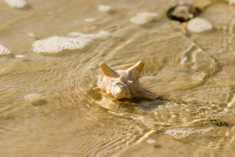 4 seashell zdjęcia royalty free
