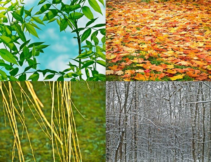 4 stagioni fotografia stock