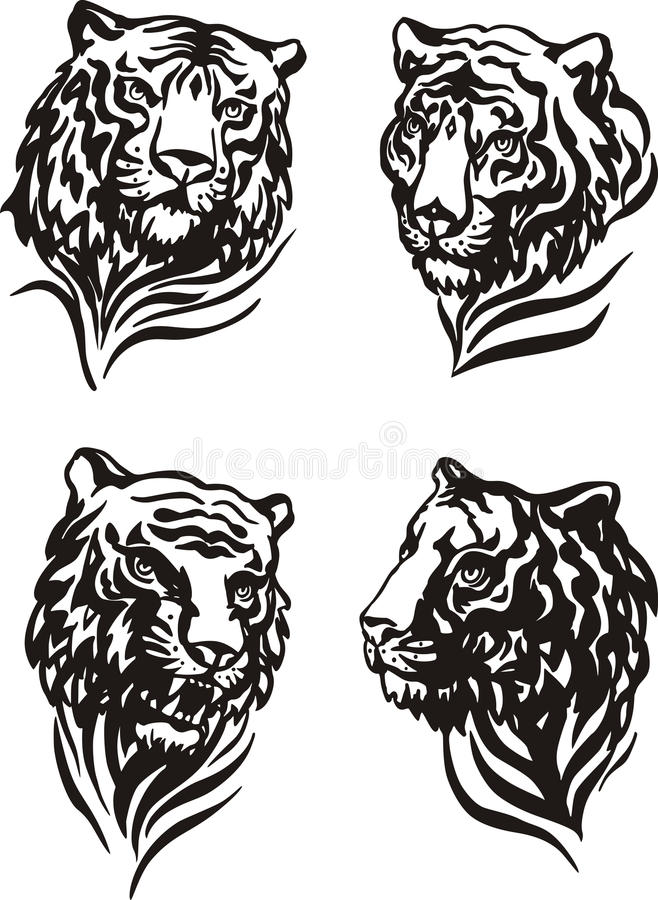Free 4 Tiger Heads Royalty Free Stock Photo - 36415075
