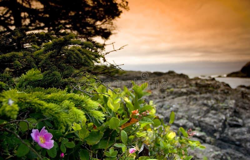 Download 4 tofino zdjęcie stock. Obraz złożonej z morze, woda, żeglarz - 144414